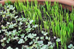 sprouts-763457_960_720