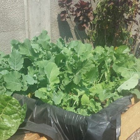 gladys simonda grow veggies