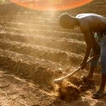 Life as a zambian farmer