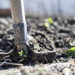 Stay home, stay safe and start a vegetable garden