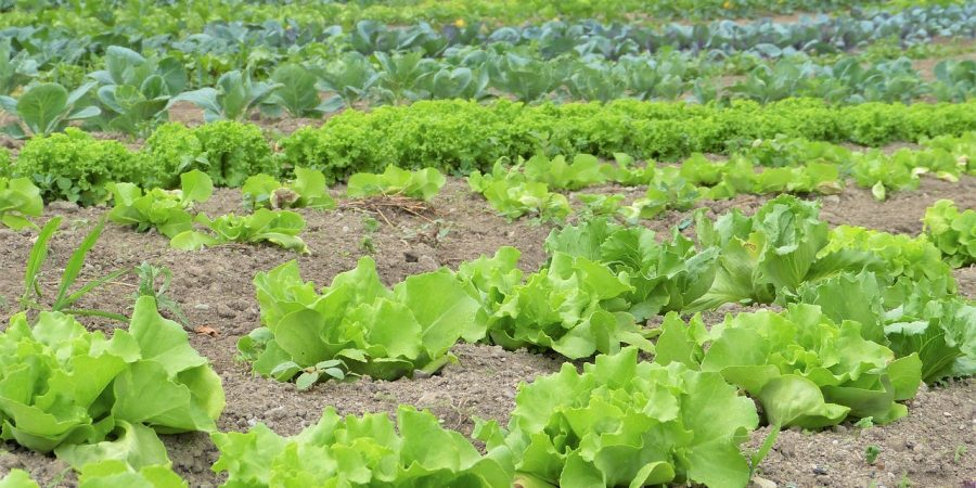 crop rotation in zambia